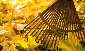 $225 for Four Hours of Fall Yard Clean-Up, Plus Debris Disposal