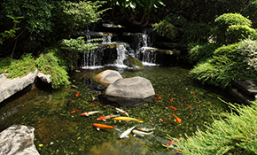 $750 Pond, Stream, and Waterfall Cleaning