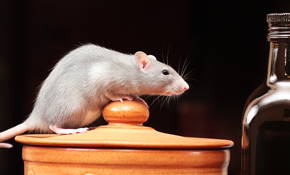 $199 for Winter Rodent Trapping Package with Free Rodent Exclusion Inspection