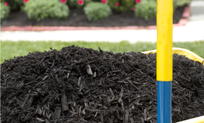 $293 for 3 Cubic Yards of Premium Mulch Delivered and Spread Plus up to 5 Small to Medium Shrubs Trimmed and Shaped