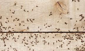 $79 for a Preventive Interior and Exterior Pest Treatment
