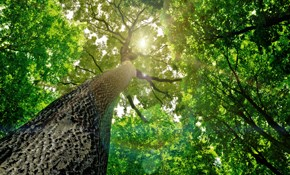 $1,350 for $1,500 Credit Towards Tree Service
