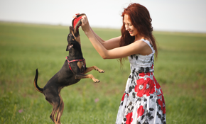 $54 Pet Sitting Visits Plus Dog Walking Sessions with Initial Consultation