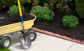 $525 for a Landscaping Package, Including Plants and Installation