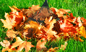 $249 for Leaf Blowing/Bagging and Gutter Cleaning