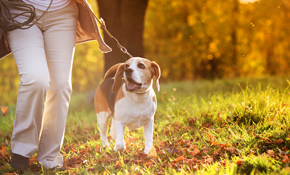 $46 for 2 Group Hikes for One Dog