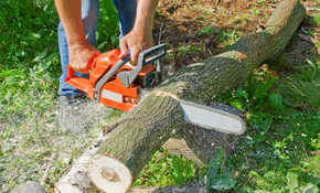 $900 for Bush and/or Log Removal