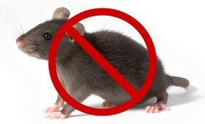$99.99 for Preventive Mouse Control Treatment with NO CONTRACT!