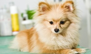 $45 for Small Dog Grooming