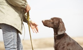 $1327.50 for Dog Obedience and Behavior Modification Training