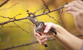 $100 Professional Tree Health and Risk Assessment, Plus $100 Credit