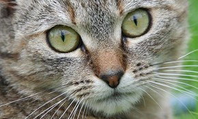 Annual Exam, Vaccinations, and Dental Cleaning for Your Cat or Small Dog - $200!