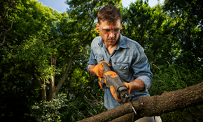 $360 for 4 Labor-Hours of Tree Service