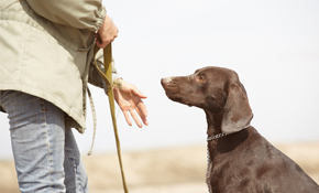 $99 for a Private In-Home Dog Training Session