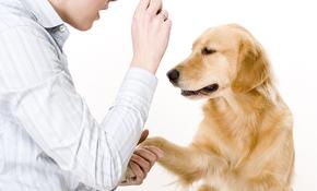 $275 for In Home Canine Behavior Assessment