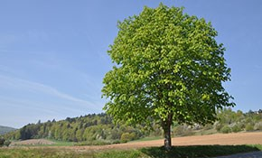 $500 for a Tree Site Plan for Property Development