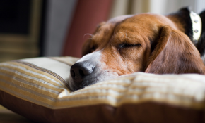 $82 for 1 Month of Dog Waste Removal Services for 4 Dogs