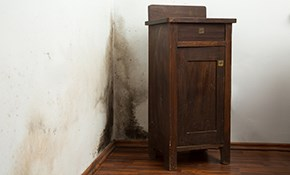 $195 for Mold Inspection and 3 Air Samples