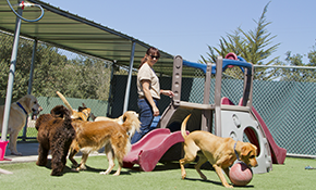 $26 for 1 Night of Dog Boarding Services