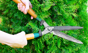 $50.00 For a 1-Time Bagworm Treatment On Evergreen Bushes