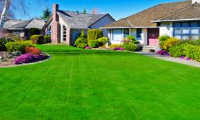 $50 Lawn/Landscape Maintenance Consultation