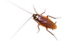 $390 for Annual Pest Control Agreement!