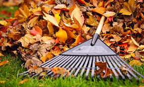 $180 for 2 Hours of Yard Clean-Up, Plus Debris Disposal