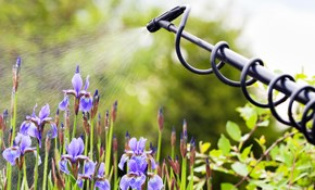 $50 for a Detailed Soil Analysis with a $50 Credit Towards an Annual Lawn Spray Program