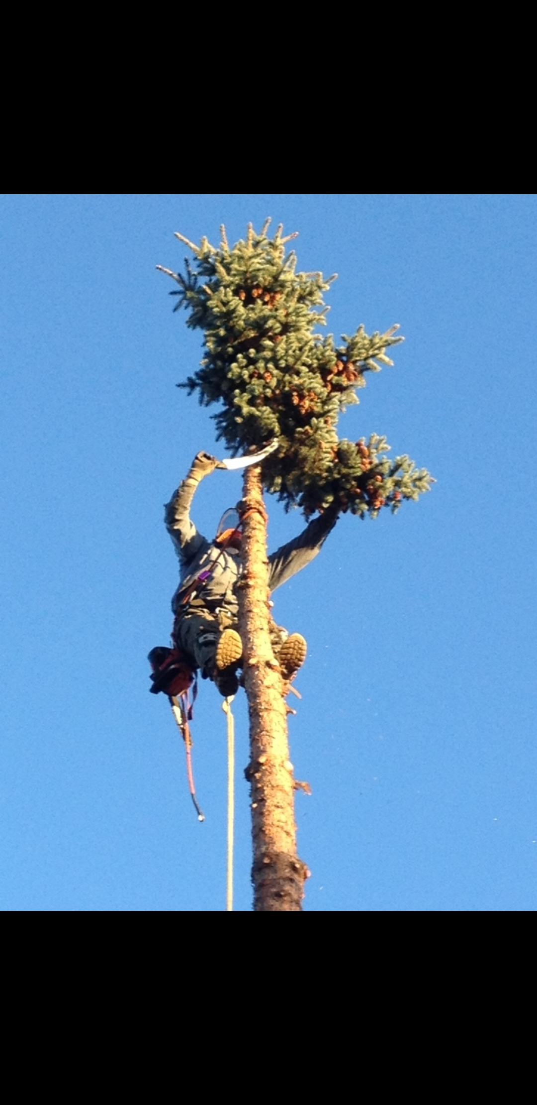 Alaska Tip Top Tree Service logo