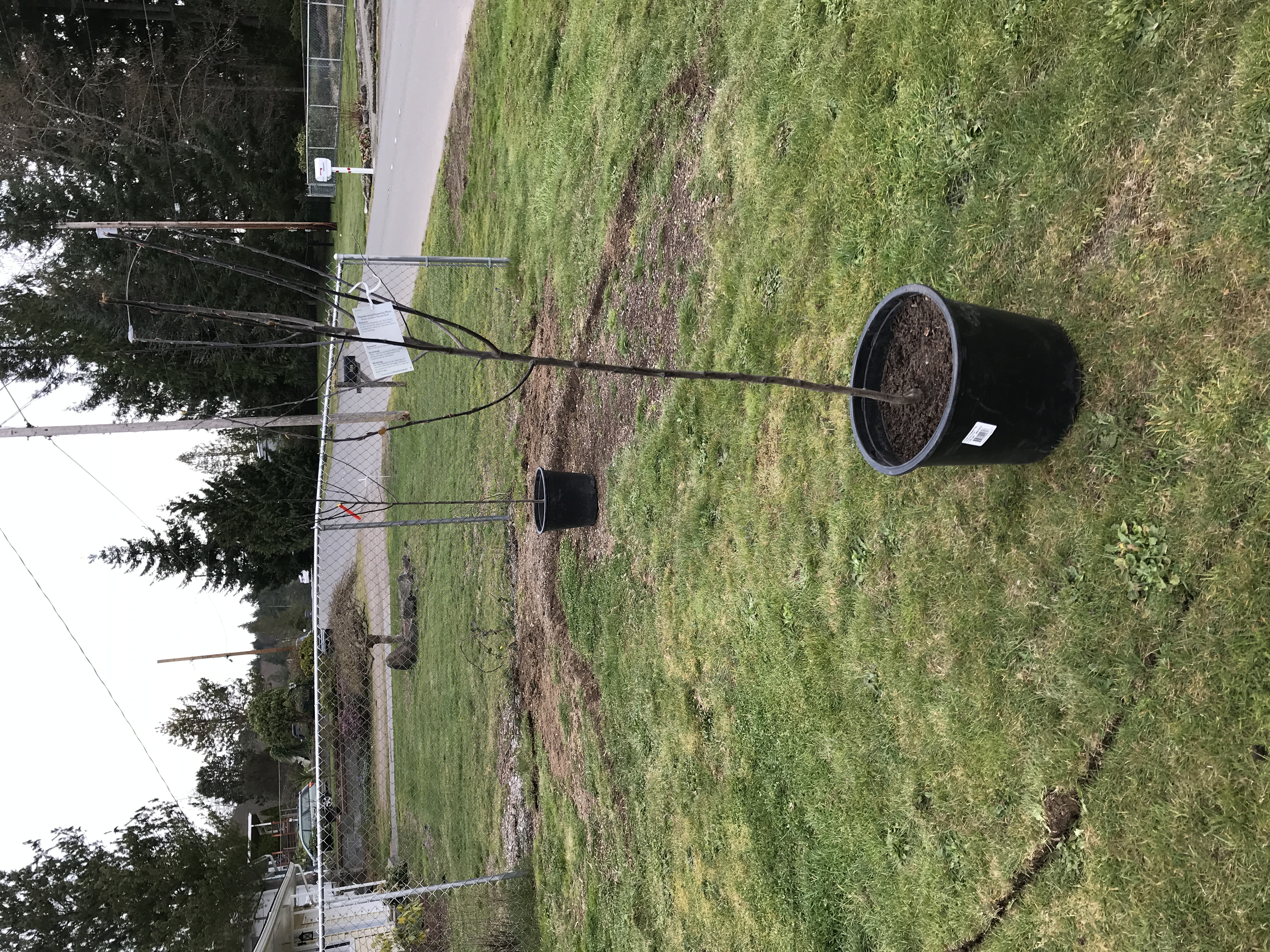 Two Brothers Landscaping And Tree Services Reviews Shelton Wa Angie S List